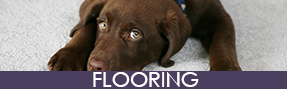 Dog on Carpet - Flooring Contractor